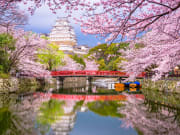 Japan_Hyogo_Himeji_Castle_Cherry_Blossoms_shutterstock_1305360364