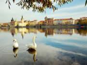 Czech Republic_Prague_Vltava River Swans