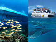 Atlantis Submarines Kona & Body Glove Whale Watch Cruise Combo