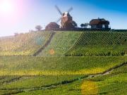 France_Champagne Region_near Vernezay_vineyard_windmil_shutterstock_464216816-crop