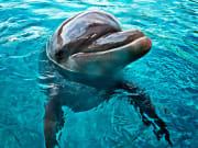 US_Hawaii_Dolphin_shutterstock_120732022