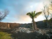 Devastaion area