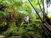 Rainforest at Volcanoes Park