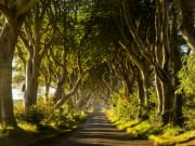 UK_Northern Ireland_Dark Hedges