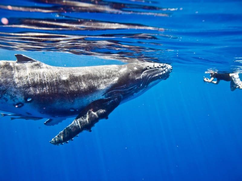 泳ぐ 海 英語 で 【夢占い】海の夢の意味とは?泳ぐ夢は恋の始まり!?