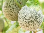 shutterstock_1074932444_melon