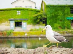 Hokkaido_Otaru_Canal_shutterstock_663327265