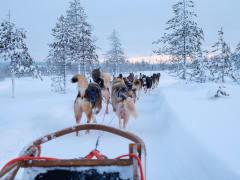 Husky farm, snowmobile safari, Lapland