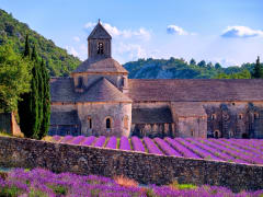France Provence Luberon Senanque Abbey Lavender