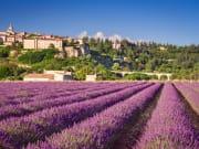 France Provence Lavender Fields