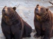 Japan_Hokkaido_Noboribetsu_Bears_shutterstock_1082559857
