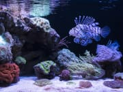 fish swimming near coral reef at AQWA australia