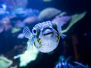 aqwa aquarium of western australia