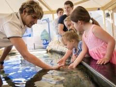 children touching real live starfish in AQWA