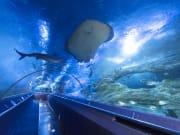 sharks and stingray inside AQWA