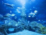 fish swimming inside aquarium of western australia