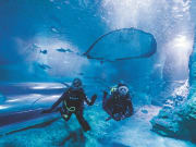 divers inside aqwa aquarium of western australia