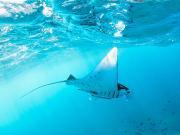 Bali Nusa Penida Manta Point Diving Tour
