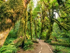 Washington_Hoh Rainforest_Olympic National Park