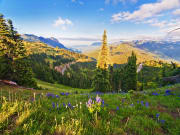 Washington_Hurricane Ridge_Olympic National Park
