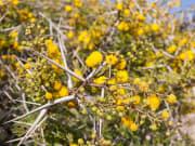 Souss Massa National Park, flowers