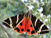 Butterflies Valley, Rhodes