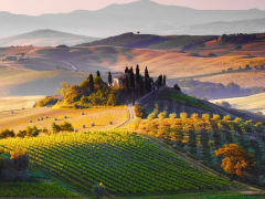 cypress trees, florence, unesco, Val d'Orcia