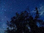 malaysia fireflies