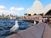 Australia_Sydney_Opera_House_Seagull_Harbour_shutterstock_365068229