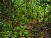 Gunung Gading's nature trails