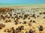 stromatolite_shutterstock_454756570
