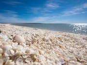 Perth_Shark Bay_Shell Beach_shutterstock_140879062