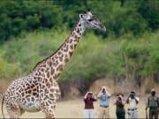 Safari_Hotspots2c Tours2