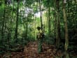 Jungle_trekking_1