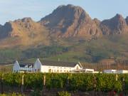 Stellenbosch_Vineyard at Winery