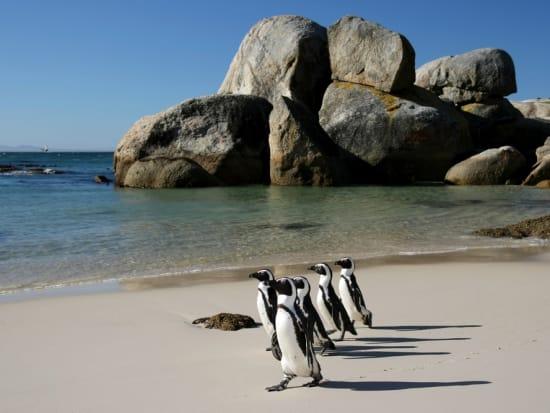 Capetown_Boulders_beach_shutterstock_59856799