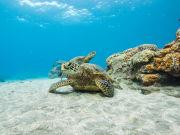 PWF_turtle
