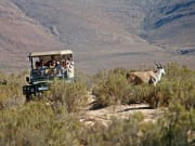 Aquila Private Game Reserve _Game Drive