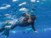OQ_Dolphin_Snorkel (3)