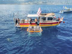 SharkBoat1