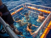 SharkBoat2