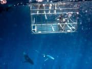 SharkBoat3