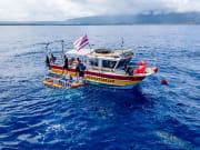 SharkBoat5