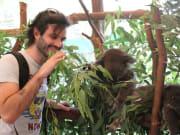 Koala, Caversham Wildlife Park