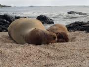 Galapagos_LaLoberia_shutterstock_639132409