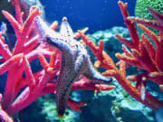 SEA LIFE Bangkok Ocean World Ticket