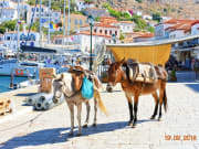 Visit_Hydra_with_all_day_cruise