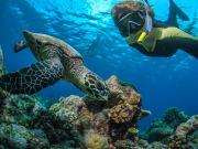 Sea Turtle Selfie_shutterstock_403434658