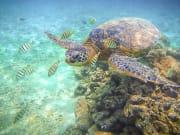 Turtle_shutterstock_158064818