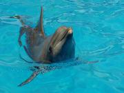 USA_Miami_Seaquarium Dolphin